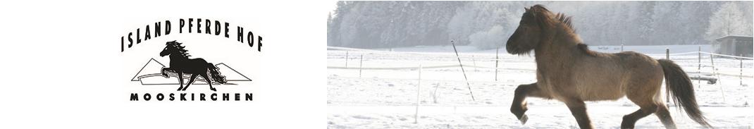 Islandpferde Wenzel
